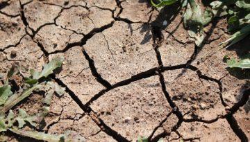Earth's skin