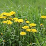 Weeds, weeds and more weeds