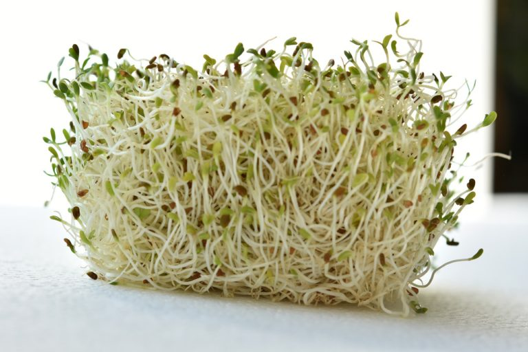 Are sprouts safe?